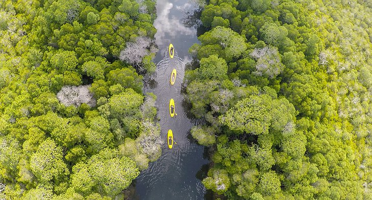 Kayaking in the mangroves of Watami, Kenya aerial photo