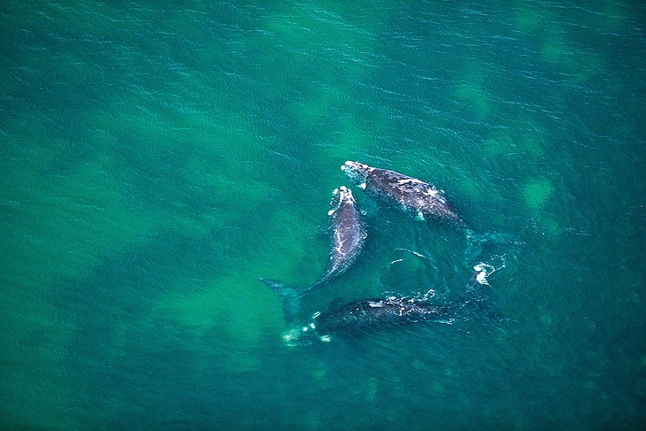 Whales in Tasmania