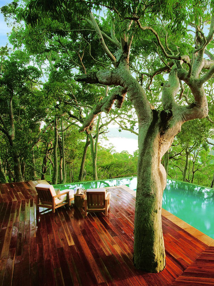 Tree and wooden pool