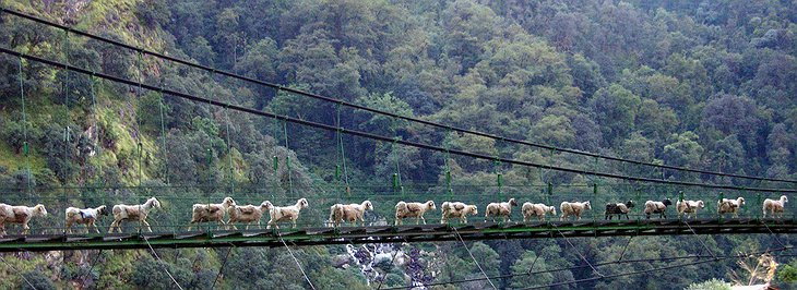 Bridge for people and sheeps