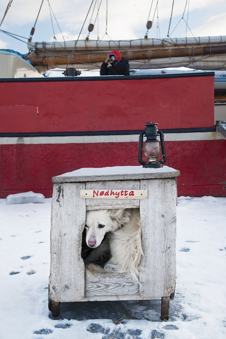 Dog in the box and Spitsbergen Ship in the background