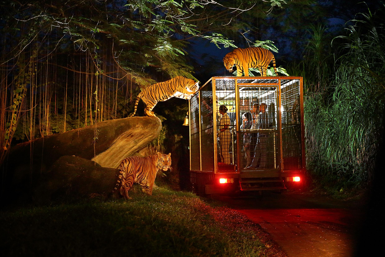 Mara River Safari Lodge Bali Feed Wild Animals From Your