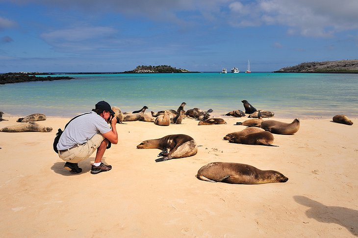 Galapagos seals on the beach with a tourist taking photos of them