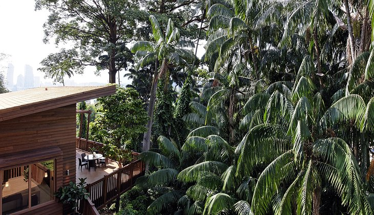 Tree Top Lofts in the jungle of Sentosa