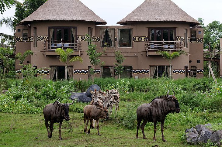 Mara River Safari Lodge wild animals at your room