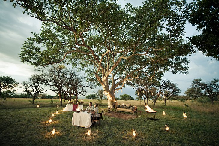 Romantic dinner in the nature under a tree