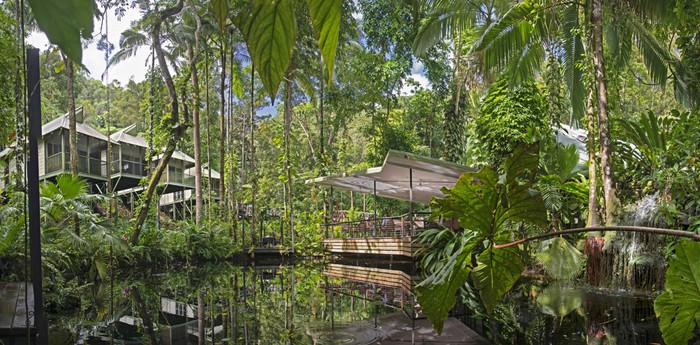 Daintree Eco Lodge and Spa - Aboriginal Jungle Paradise