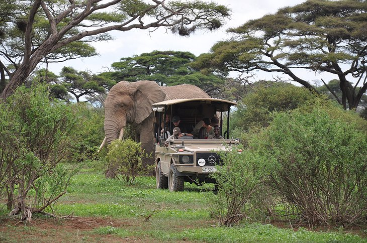 Arusha National Park safari