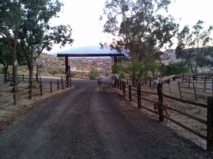 Genuine Draft Horse Ranch gate with horses