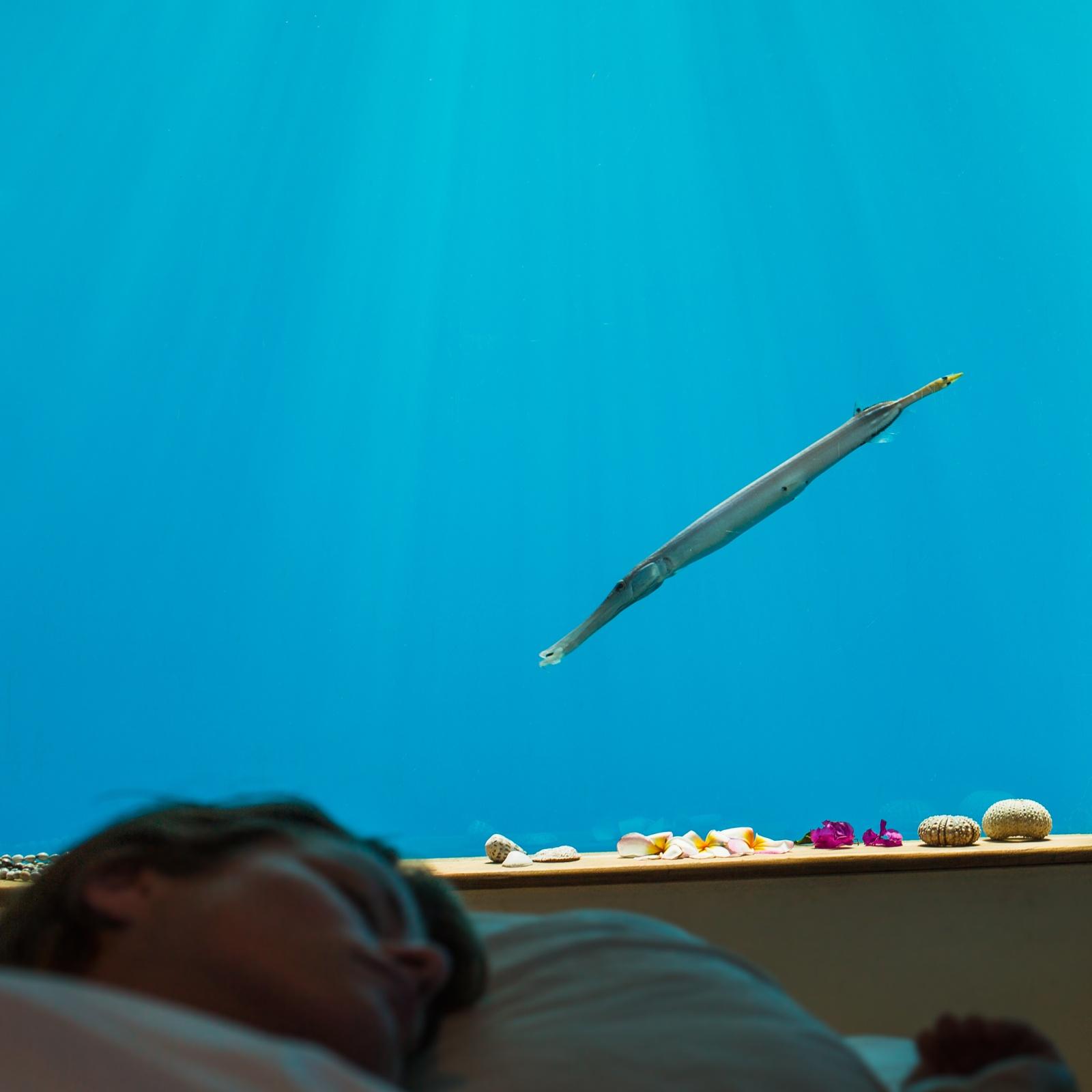Underwater Hotel Room At Night Inside The Manta Resort Underwater Room