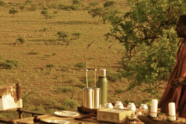 Dining with view on giraffes