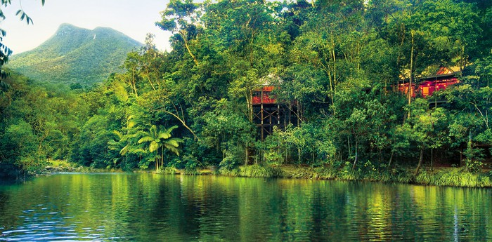 Silky Oaks Lodge - Sleep inside the lush tropical forests
