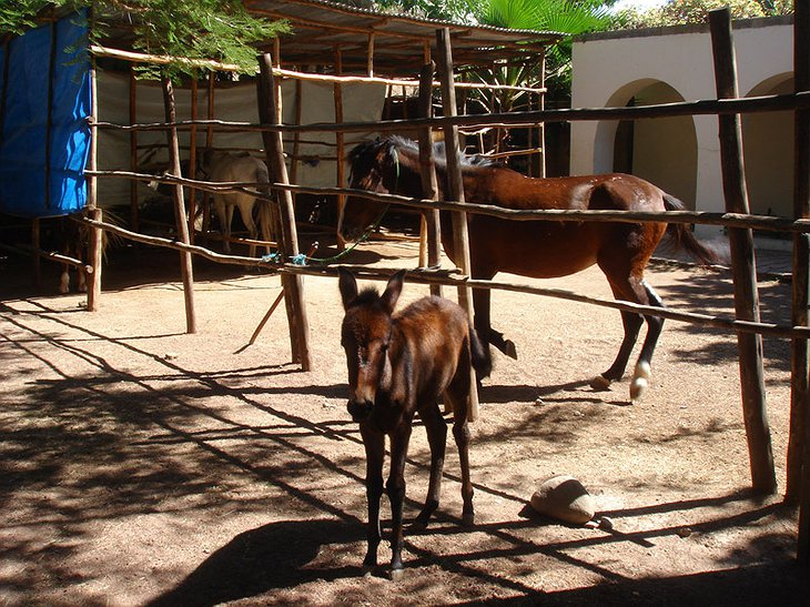 Safari Lodge Adama hotel horses