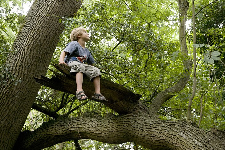 Boy sitting on a tree