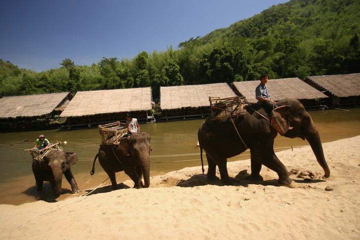 Elephant riding at the River Kwai Jungle Rafts