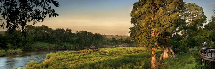 Sabie River with Elephants panorama