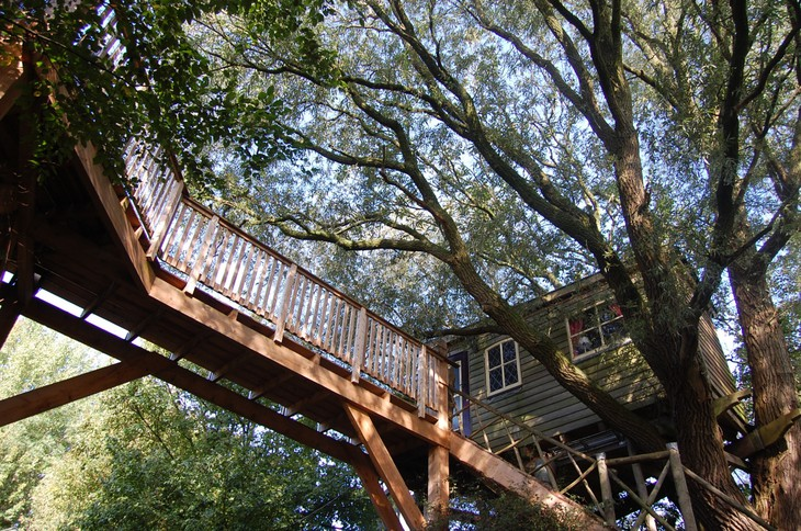 Suspended bridge leading to the tree house