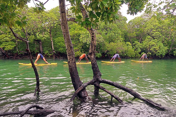 SUP Yoga in the mangroves