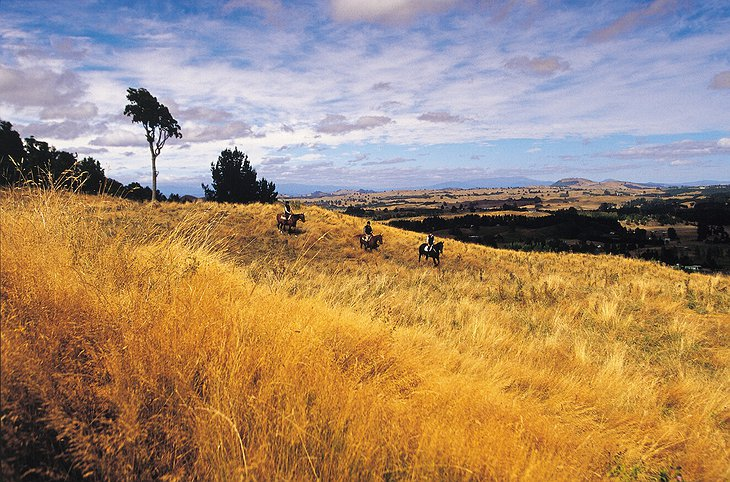 Horseriding in Taupo