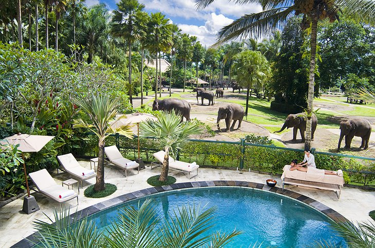 Swimming pool and elephants