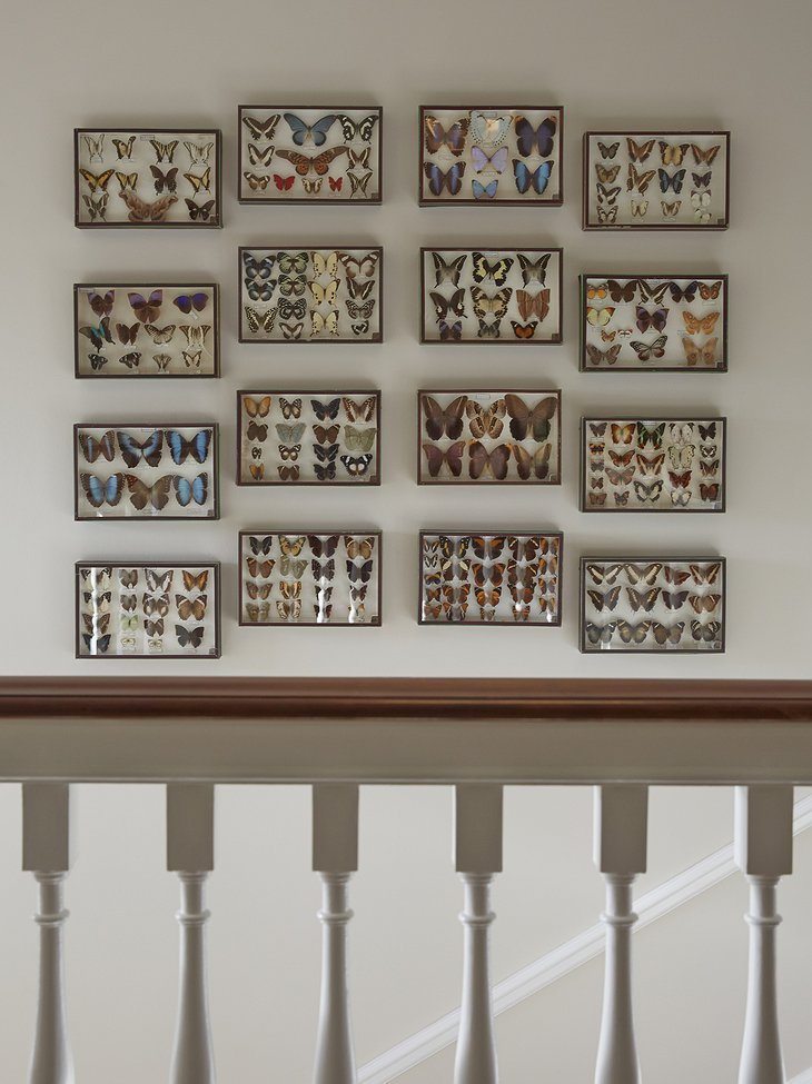 Foxhill Manor butterfly collection on the wall