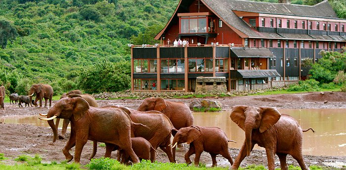 The Ark Kenya - Wildlife Spotting From Your Balcony In The Aberdare National Park