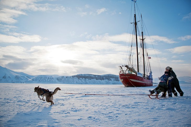 Dog sledging on the ice of the fjord