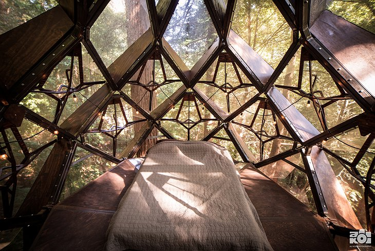 O2 Treehouse Pinecone Bedroom