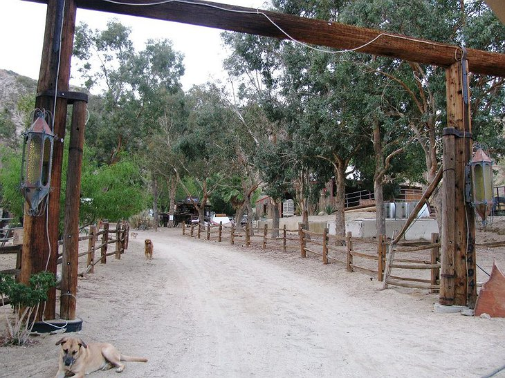 Genuine Draft Horse Ranch gate with dogs
