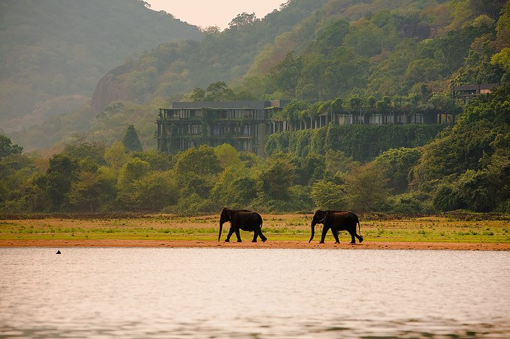 Heritance Kandalama Hotel and elephants in the Kandalama Wewa