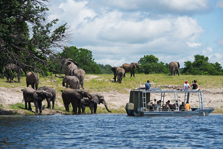 Chobe National Park game viewing