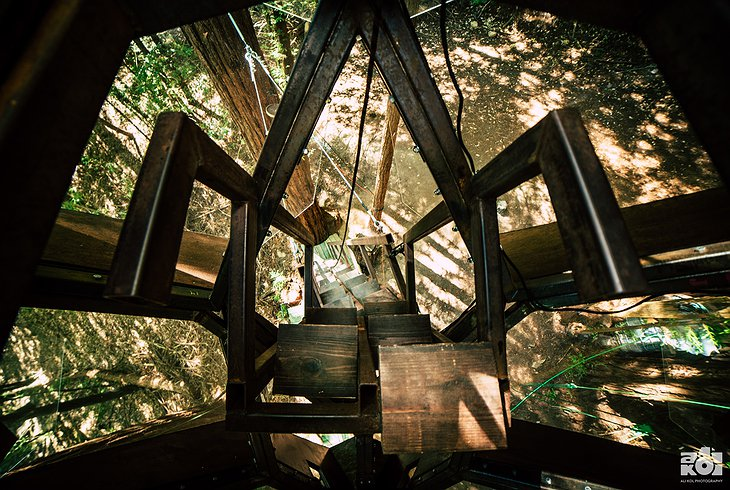 O2 Treehouse Pinecone Staircase