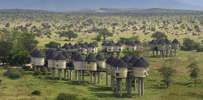 Sarova Salt Lick Game Lodge - Quirky Buildings On Sticks Surrounded By Wildlife