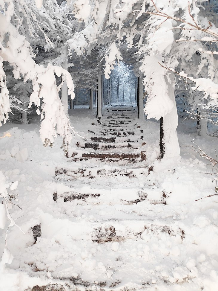 Snowy Stairs in the Forest in Iceland