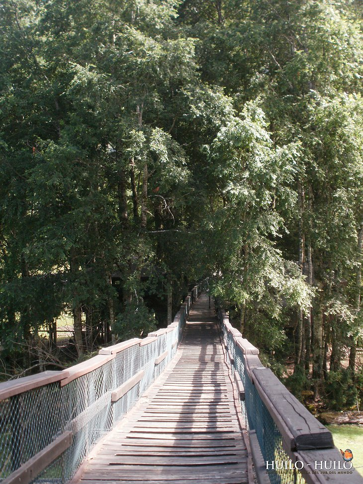 Wooden bridge leading to Canopy Village