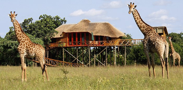 Pezulu Tree House Game Lodge - Blend Into The Bush