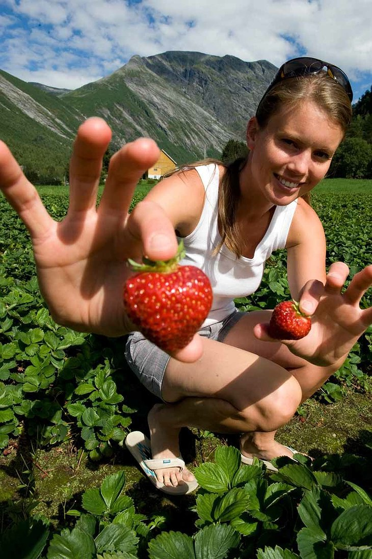 Cute girl collecting strawberries