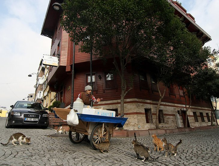 Street seller feeding cats in front of Dersaadet Hotel