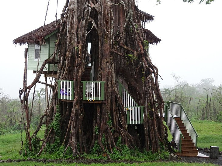 Banyan tree treehouse
