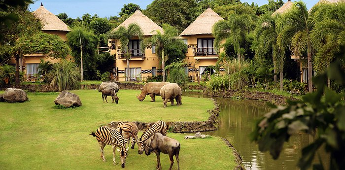 Mara River Safari Lodge Bali - Feed wild animals from your window