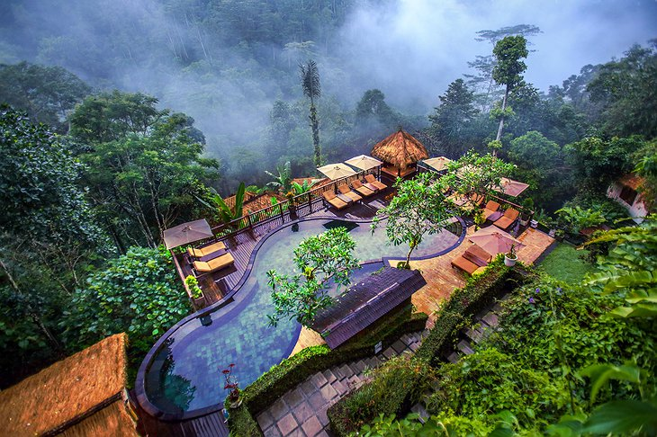 Mystical Jungle Pool