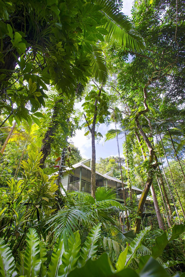 Daintree Eco Lodge building in the lush rainforest